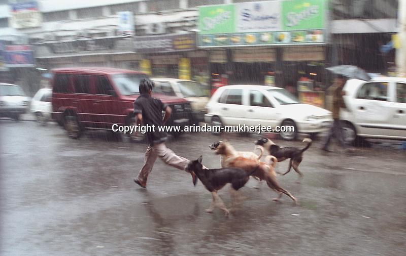 A boy plays with street dogs in a heavy rain in Calcutta.
