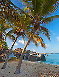 Virgin Gorda, British Virgin Islands, Caribbean <br /> Palm trees lean out towards the beach on Spring Bay, Spring Bay National Park