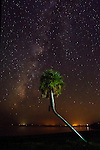 The Milky Way glows around a palm tree at Shell Point Beach in Wakulla County, Florida along the Forgotten Coast of the Florida panhandle.<br />