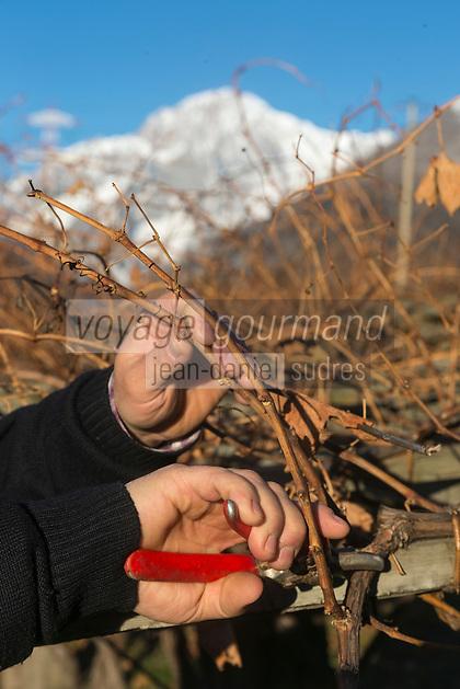 Italie, Val d'Aoste, Morgex:   Vignes  en pergola d' Ermes Pavese , dans le  hameau de Villaret avec en fond le Mont Blanc  - Taille de la vigne // Italy, Aosta Valley, Morgex: Ermes Pavese vineyards, village of Villaret with Mont Blanc in the background - Wine pruning