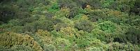 Europe/Provence-Alpes-Côte d'Azur/83/Var/Iles d'Hyères/Ile de Porquerolles: Végétation près du Cap des Mèdes vue depuis le Fort de la Repentance