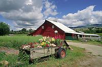 RED BARN and FLOWERS -  OREGON FARM