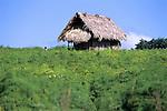 Petén House