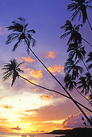 Kapuaiwa Palm Grove, Molokai. Historic10 acre coconut grove and beach park at sunset