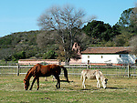 Horse and donkey at La Purisima Mission SHP