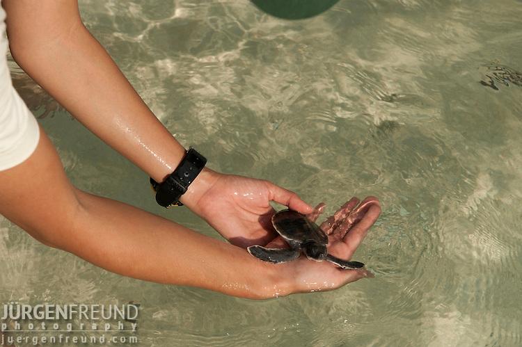 WWF Malaysia Marine Biologist Nina Ho release a baby green turtle in Sibuan Island