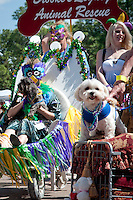 Festive fun with live music, pet costume contests, and a parade, during the Collier Spay Neuter Clinic's Fourth Annual Mardi Paws Parade and Pet Fest, at the Mercato, Naples, Florida, USA, Feb. 26, 2011. Photo by Debi Pittman Wilkey