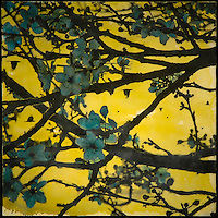 Plum blossoms on branch with crows in yellow sky photo transfer over encaustic painting.