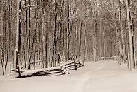 Path disappearing into deciduous forest, after heavy snowfall, with old, dilapidated split-rail fence, on farm in Sutton West, Ontario.