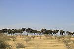 Israel, Shephelah, a view of Dudaim forest