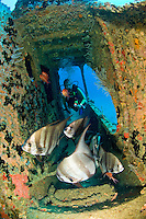 Diver on the Lerico Wreck<br />