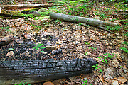 Human Impact - Burned artifact (utility pole) in the area of Camp 15 along the old railroad bed of the East Branch & Lincoln Railroad in the Pemigewasset Wilderness of Lincoln, New Hampshire USA. The EB&L Railroad was a logging railroad in operation from 1893 - 1948. <br />