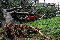 SÃO PAULO,SP,18 FEVEREIRO 2013 -  CHUVA ZONA LESTE  - A forte chuva que caiu na tarde de hoje derrubou  arvore sobre um carro  na pça Sonia Aparecida Lima  no Pq São Lucas na  zona leste.FOTO ALE VIANNA - BRAZIL PHOTO PRESS.