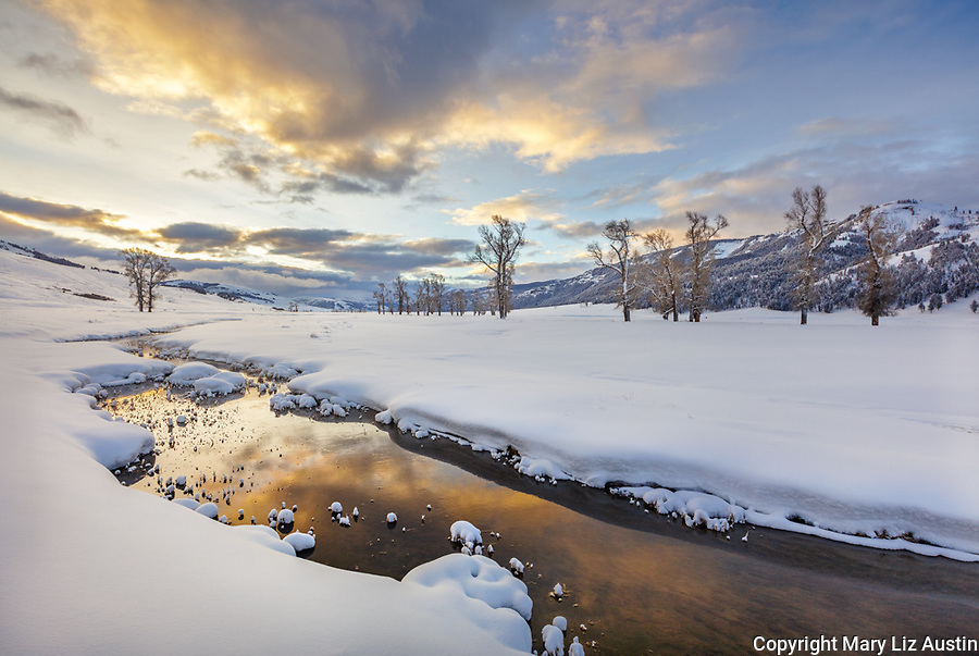 Yellowstone National Park, Wyoming: Morning clouds reflected in the Lamar River in the Lamar Valley with distant cottonwood trees and Amethyst Peak in winter
