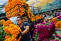 A Mexican flower market vendor unloads bunches of marigold flowers (Flor de muertos) for Day of the Dead festival in Mexico City, Mexico, 31 October 2016. Marigold flowers (Cempasúchil) are used to adorn graves and altars during the Day of the Dead (Día de Muertos). A syncretic religious holiday, combining the death veneration rituals of the ancient Aztec culture with the Catholic practice, is celebrated throughout all Mexico. Based on the belief that the souls of the departed may come back to this world on that day, people gather at the gravesites in cemeteries, praying, drinking and playing music, to joyfully remember friends or family members who have died and to support their souls on the spiritual journey.