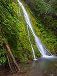 Olympic National Park, Wasington<br /> Madison Creek Falls spreads on a mossy wall in the Elwha river valley