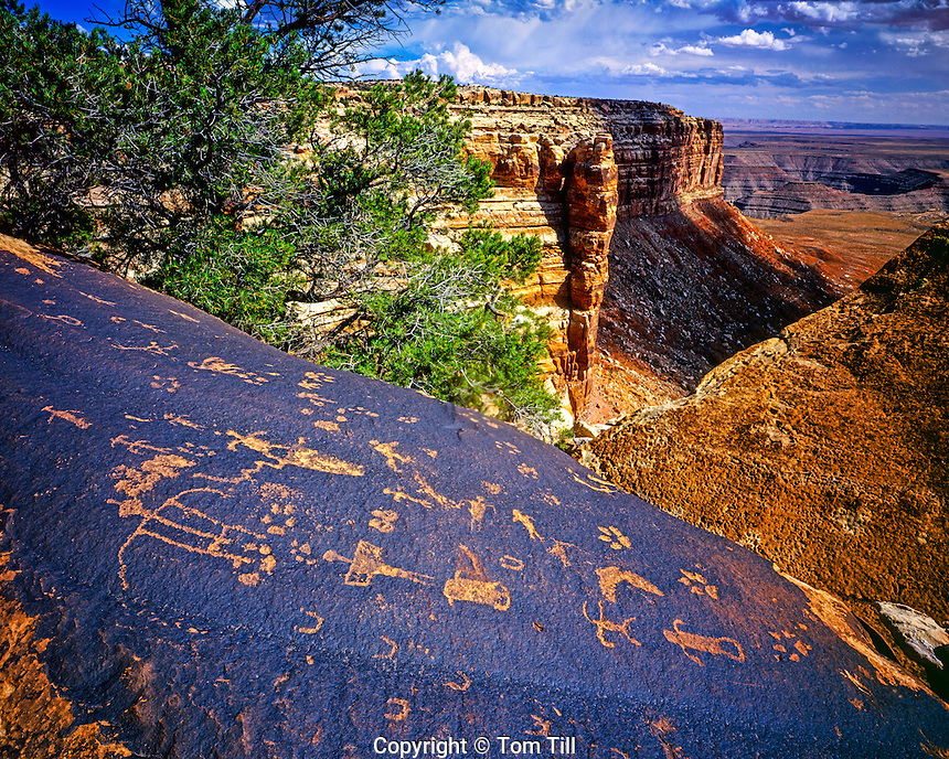 Anasazi petroglyphs, San Juan River, Utah, Glen Canyon Natinal Recreation Area, San Juan River arm of Lake Powell, August