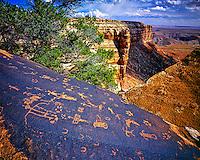 Anasazi petroglyphs, San Juan River, Utah, Glen Canyon Natinal Recreation Area, San Juan River arm of Lake Powell, August