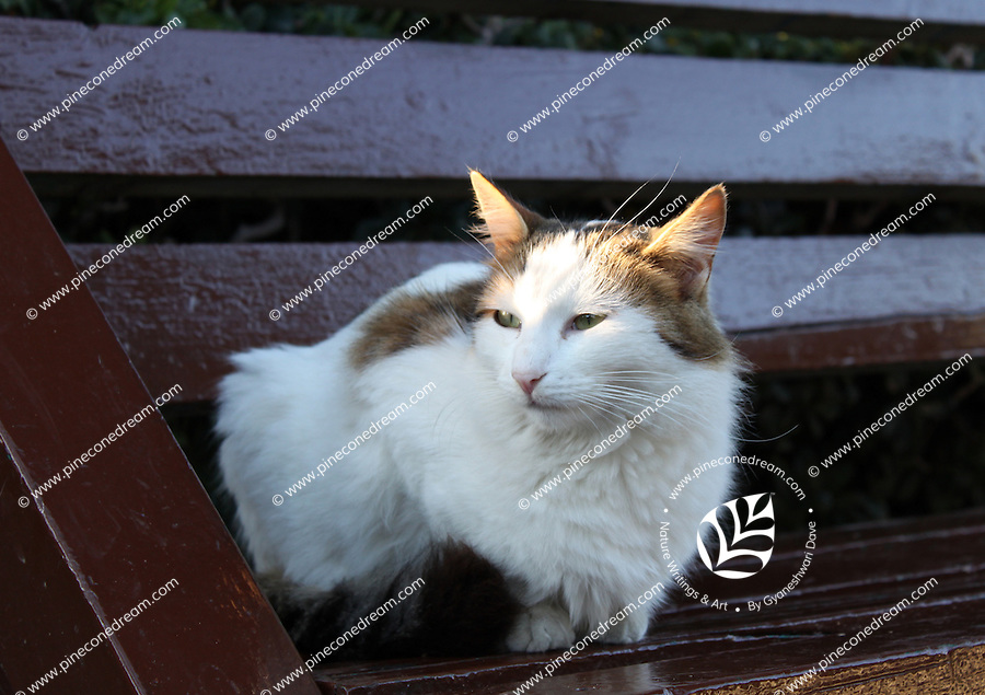 Stock image of white furry cat sitting on bench glancing over keenly.