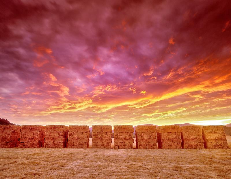 F00089M.tif   Stacks of Hay and sunset. Near Alpine, Oregon