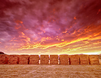 F00089M.tif   Stacks of Hay and sunset. Near Alpine, Oregon