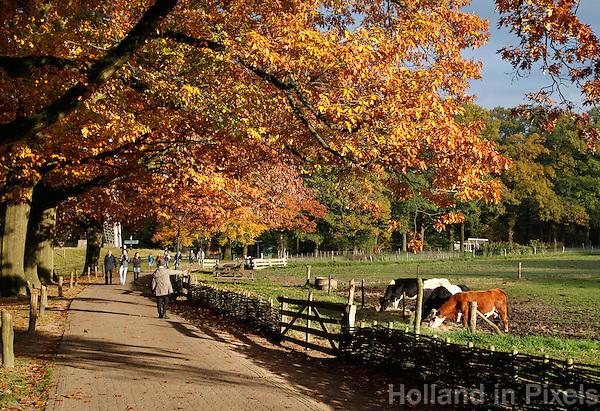 Herstwandeling in Gelderland