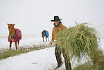 A young man feeds his horses at the Magic Mountain Ranch in Three Forks, Montana.