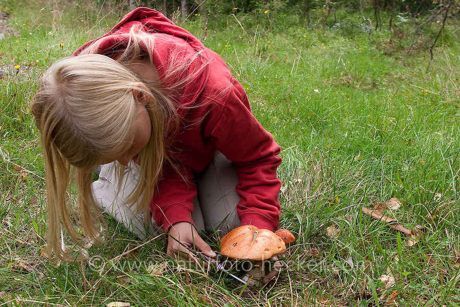 Kind erntet Pilz, Rotkappe, Rot-Kappe, Birken-Rotkappe, Heide-Rotkappe, Leccinum versipelle, Leccinum testaceoscabrum, Pilzernte, Pilz-Ernte, Ernte, Outdoor