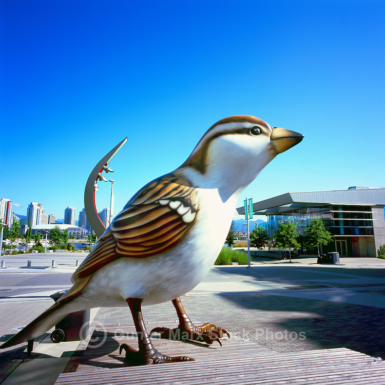 Vancouver, BC, British Columbia, Canada - Giant Sparrow Sculpture at Olympic Plaza, at the Village on False Creek
