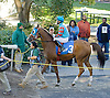 Adios Vacquero before The Arabian Claiming Crown at Delaware Park on 10/13/12