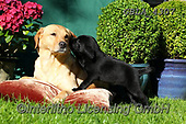 Bob, ANIMALS, REALISTISCHE TIERE, ANIMALES REALISTICOS, dogs, photos+++++,GBLA4307,#a#, EVERYDAY