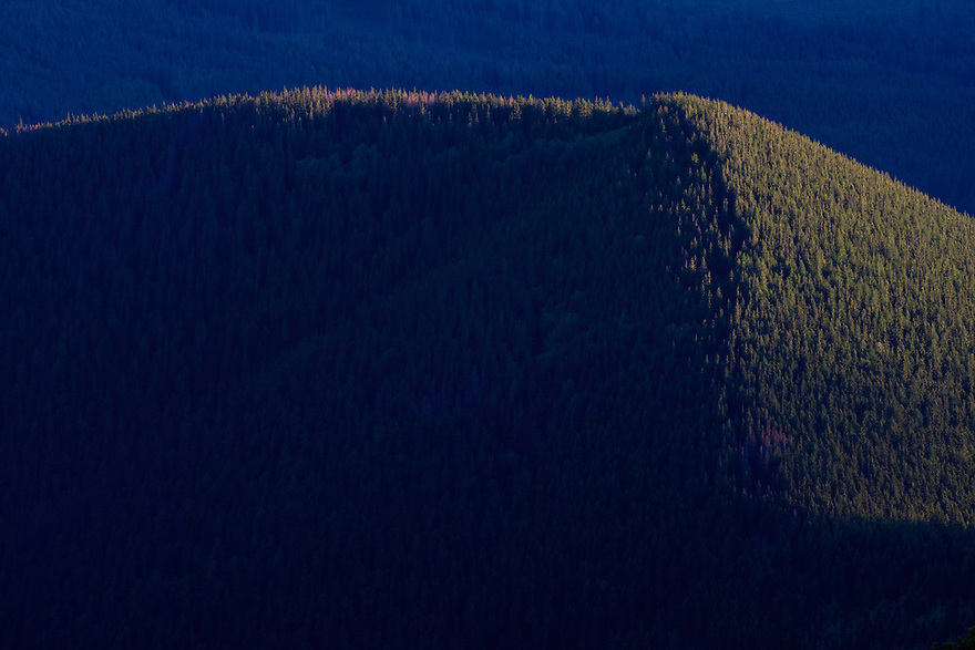 Mountain ridge with spruce forest in afternoon light. Western Tatras, Slovakia. June 2009. Mission: Ticha