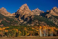 749450409 low angled morning light turns the tetons and some small ranch buildings a golden yellow and highlights the fall colored aspens in grand tetons national park wyoming