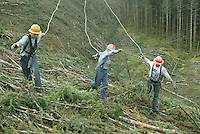 With chokers in hand, from left, Plikat Logging rigging slinger Dan Parker, choker setter David Murphy and second rigger Justin Murphy, David's nephew, look for logs to sling on the side of a hill near Anlauf, Ore., May 16, 2003 . Dan Parker is a fourth generation logger. His father heads up crew on another hill.