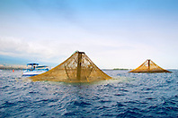 3,000-cubic-meter submersible fish pens installed in open ocean just off Kona Coast to raise Kona Kampachi, Hawaiian yellowtail, aka almaco jack or kahala, Seriola rivoliana, note - the submersible fish pens in raised postion to feed the fish inside, Big Island, Hawaii, Pacific Ocean