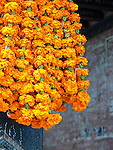 Garlands of marigolds are believed to bring good luck and happiness. The flowers are used during puja (prayer) ceremonies as offerings, and as decoration at weddings and festivals across the subcontinent