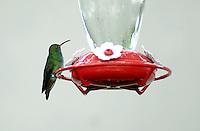 CALI - COLOMBIA: Aves en los jardines. / Birds in the garden Photo: VizzorImage / Luis Ramirez /Staff