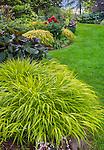 Vashon-Maury Island, WA: Japanese forest grass (Hakonechloa macra 'All Gold') in a shade garden with ligularia, red peony and japanese forest greass (Hakonechloa macra 'Aureola').