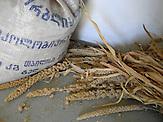 Murad Gogoladze und seine Felder und Produkte, Hirse war in Westgeorgien früher weit verbreitet, heute bauen viele Bauern stattdessen Mais an.