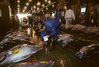 Asie/Japon/Tokyo/Tsukiji: Le marché aux poissons - Détail des thons vendus à la criée