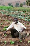 Malawi, Thyolo, NGO CARD Churches Action in Relief and Development, Bewaesserungssystem im Dorf Samuti, bewaesserte Gemuese Felder mit Bohnen von Farmer John Chimwaye, 56
