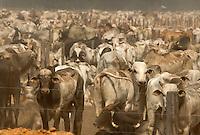 Pecuária Fazendas