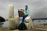 BNPS.co.uk (01202) 558833. <br /> Pic: ZacharyCulpin/BNPS<br /> <br /> Oyster gatherer Christopher Ranger pictured with a variety of growing trays on The Fal estuary<br /> <br /> The Lone Ranger - A concerned oyster fisherman is crowdfunding to set up his very own 'micro-hatchery' in a bid to restore the UK's dwindling stocks of the shellfish.<br /> <br /> Chris Ranger, 44, currently runs Britain's last surviving oyster fishery on the River Fal in Mylor Churchtown, Cornwall.<br /> <br /> The site has been a hotbed for oyster activity for thousands of years but they are now on the brink of vanishing after years of overfishing.