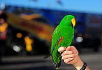 Feb. 17 2012; Chandler, AZ, USA; An NHRA fan holds a parrot on her hand during qualifying for the Arizona Nationals at Firebird International Raceway. Mandatory Credit: Mark J. Rebilas-