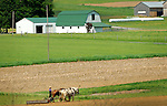 An Amish farmer prepares his fields for planting.