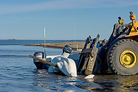 Inupiaq subsistence whalers use a loader to haul in a beluga whale (Delphinapterus leucas) catch, outside the village of Kaktovik, Barter Island, arctic coast of Alaska