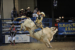 Bull Fighters
