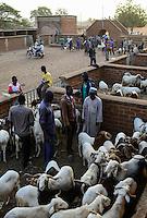 BURKINA FASO , Fada N'Gourma, sunday cattle market / Tiermarkt am Sonntag
