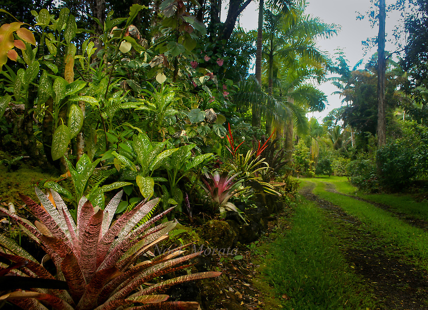 Exotic garden entryway in hawaii noel morata photography for Landscape design hawaii