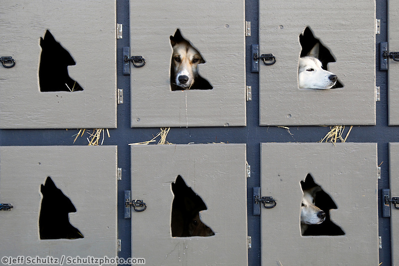 Justin Savidis dogs in their box prior to the ceremonial start  of the 2011 Iditarod in Anchorage, Alaska